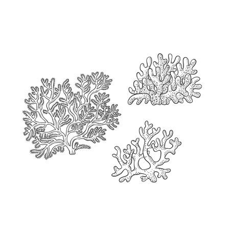 Vector sketch set corals. Three types polyps monochrome outline black illustration isolated on white background for design of tourist cards logos on marine theme.