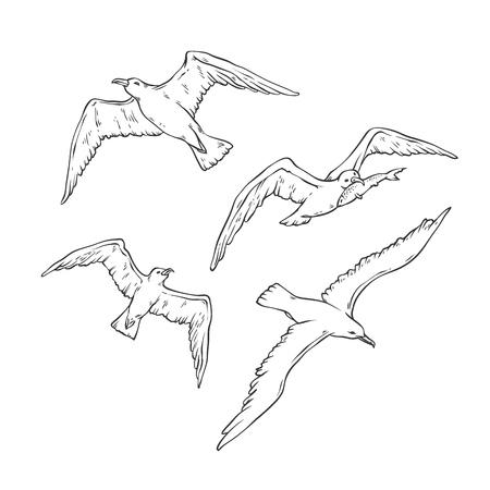 Insieme di abbozzo di vettore gabbiani in volo. Illustrazione di contorno nero monocromatico del pescatore di gabbiano uccello isolato su priorità bassa bianca per la progettazione di loghi di carte turistiche sul tema marino.