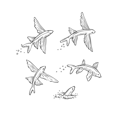 Vector set flying fish jumping dive and swim. Monochrome black sketch sea animals isolated on white background for oceanarium tourist cards or banners design.