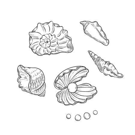 Vector set sea shells and pearls different shapes. Clam shells monochrome black outline sketch illustration isolated on white background for design of tourist cards on marine theme. Vektorové ilustrace