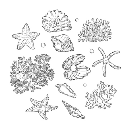 Vector set sea shells stars corals and pearls different shapes. Clam shells starfishes polyps monochrome black outline sketch illustration on white background for design marine tourist cards .