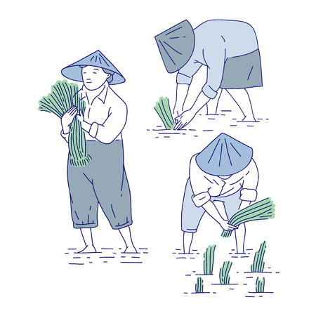 Chinese farmers planting rice seedlings. Vector set line art people in traditional costume asian agricultural culture. Vector Illustration