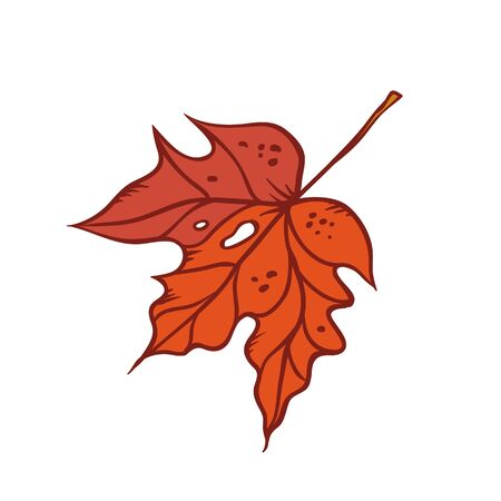 Autumn maple leaf september or october red defoliation foliage. Vector outline illustration sketch colourful isolated autumnal herbal graphic.