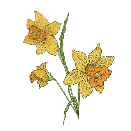 Blooming iris and Narcissus flowers. Branch with unopened buds and leaves. Vector illustration hand-drawn for design isolated on white background.