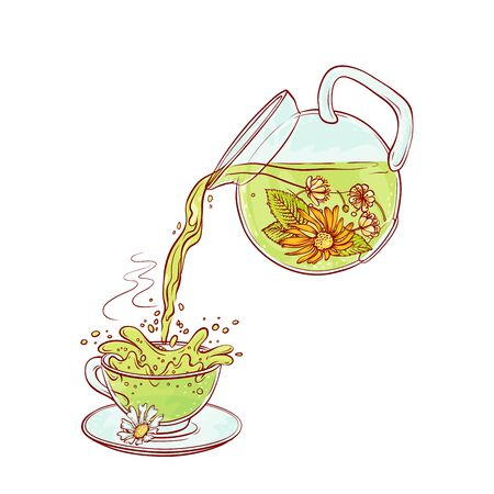 Vector tea flowers brew process. Make and pour in transparent cup hot aromatic drink with blossoming tea leaves. Sketch hand drawn illustration.
