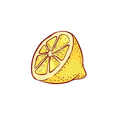 Lemon citrus vector cut fruit sketch contour illustration