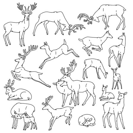 Wild deer males and females with babies jump, sleep and in other poses. Herd vector set outline black white sketch illustration.