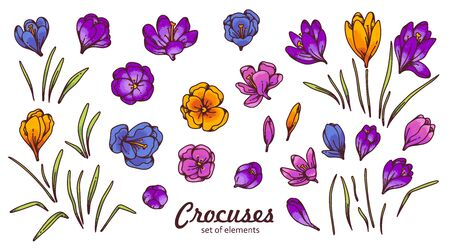 Crocus flower bud and leaves spring primroses set constructor for design card and greeting. Outline sketch illustration isolated on white background Ilustracje wektorowe