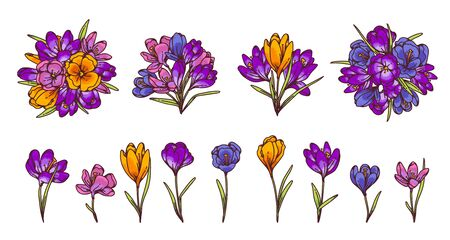 Crocus flowers and bouquets spring primroses set for design greeting card. Outline sketch illustration isolated on white background
