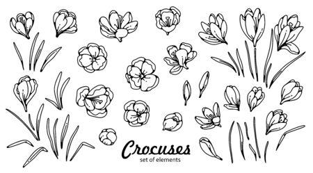 Crocus flower bud and leaves spring primroses set constructor for design card and greeting outline black white sketch illustration