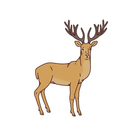 Wild deer male buck with branched horns vector outline sketch illustration isolated on white background. Stock Illustratie