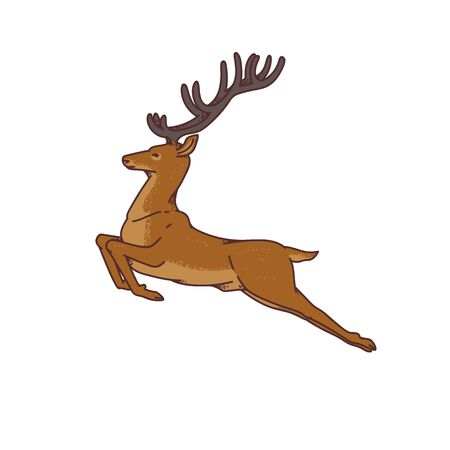 Wild deer male buck with branched horns jumped view profile vector outline sketch illustration isolated on white background.