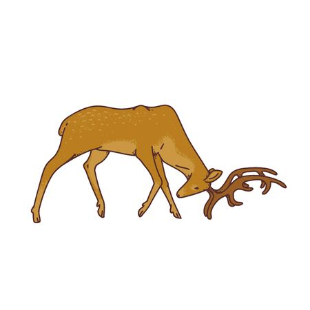 Wild deer male buck with branched horns attack butt view profile vector outline sketch illustration isolated on white background. Stock Illustratie