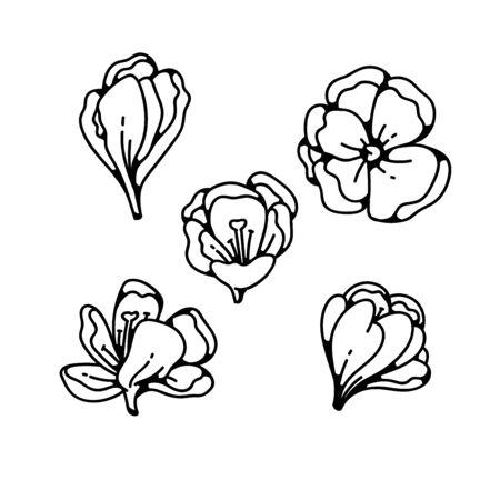 Crocus bud fleur printemps primevères ensemble contour noir blanc croquis illustration