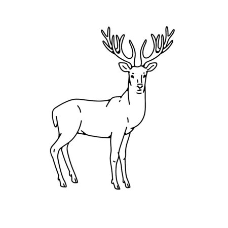 Wild deer male buck with branched horns vector outline black white sketch illustration.