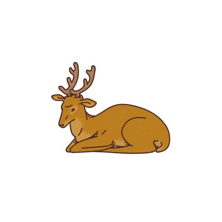 Wild young deer male buck with branched horns lay down vector outline sketch illustration isolated on white background.