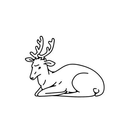 Wild young deer male buck with branched horns lay down vector outline black white sketch illustration.