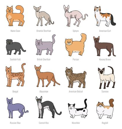 Cat breeds profile vector set contour sketch isolated illustration.