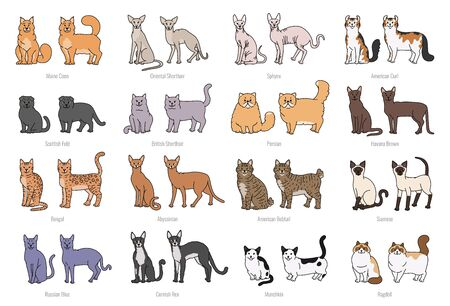 Popular cat breeds face and profile. Vector set contour sketch isolated illustration.  イラスト・ベクター素材