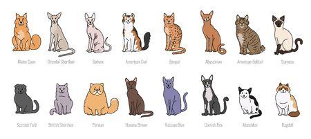 Beliebte Katzenrassen Vollgesichtsvektor Set Linienskizze isoliert Illustration. Vektorgrafik