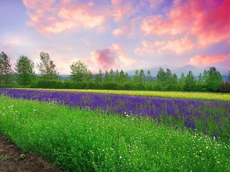 farm in Hokkaido Japan Stock Photo