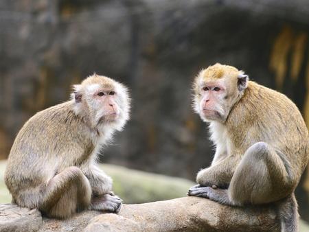 Two monkeys sit on rock photo