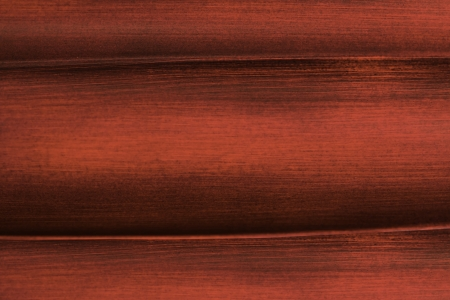 Wooden background macro closeup photo