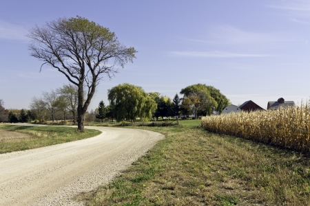 raod: Country road by growing wheat