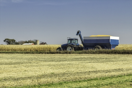 Blue agliculture tractor in the field of corn photo