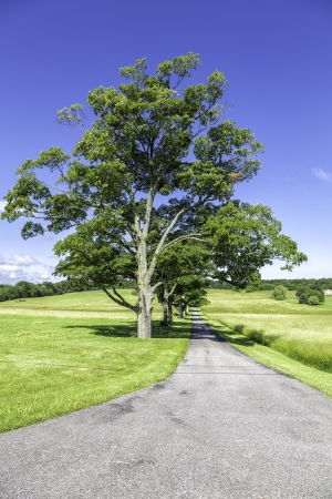 raod: Raod to organic farm with green trees