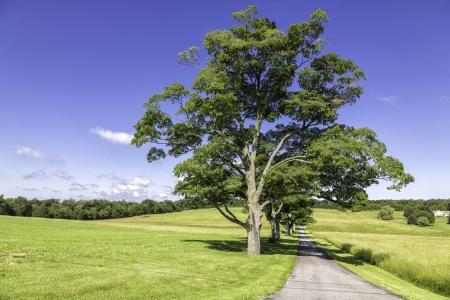 raod: Raod to organic farm on the hill with green trees