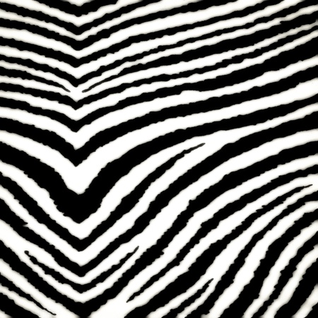 Zebra black seamless pattern photo
