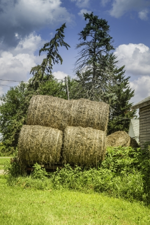bounds: Hay boundles on green grass