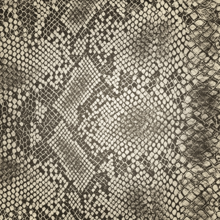 Wild animal body skin pattern photo