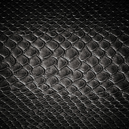 Snake black skin leather texture 版權商用圖片