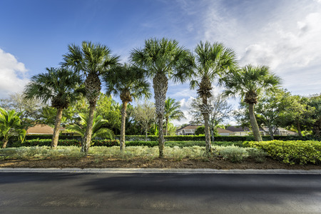Gated community houses behind palms in South Florida