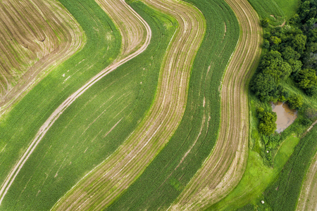 Corn field with multicolor plants and countryside road . Aerial top view Stock Photo