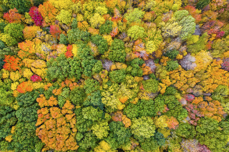 Top view of colorful forest treetops, autumn season. Michigan, United States