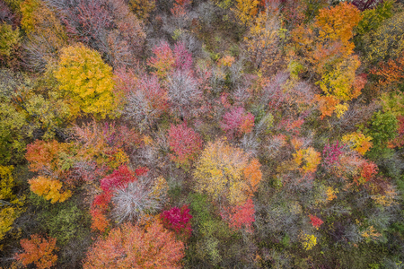 Top aerial view of colorful forest treetops, autumn season. Michigan, United States