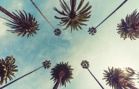 Los Angeles palm trees, low angle shot. Vintage tone