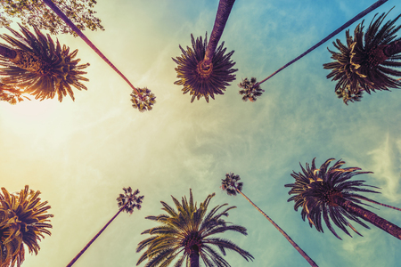 Los Angeles palm trees on sunny sky background, low angle shot. Vintage tone