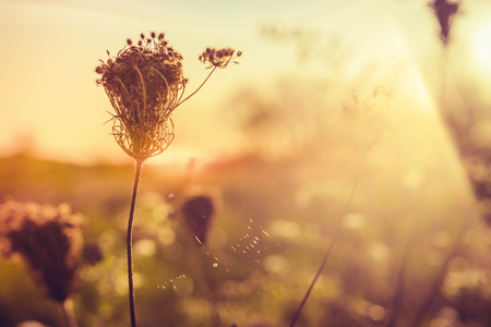 Image result for morning meadow with bees and cobwebs