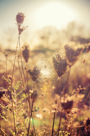 Autumn dry plants on meadow with sunlight. Blurred bokeh background Stock fotó