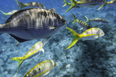 Group of fish underwater. Selective focus