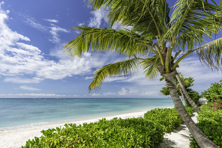 Tropical beach with palms around. Holiday and vacation concept