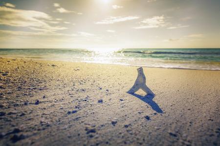 Shell on the sandy beach with sunlight above horizon