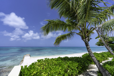 Sunny beach with tropical palms Reklamní fotografie