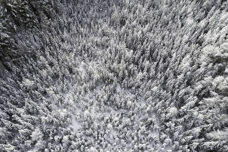Aerial top view of a winter landscape. Wood covered by fresh snow. Winter season 免版税图像