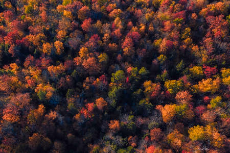 Aerial Top view of colorful forest treetops, fall season. Vermont, United States 版權商用圖片