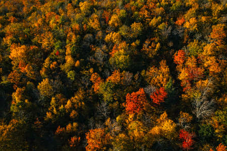 Top down view of colorful forest treetops, fall season. Vermont, United States